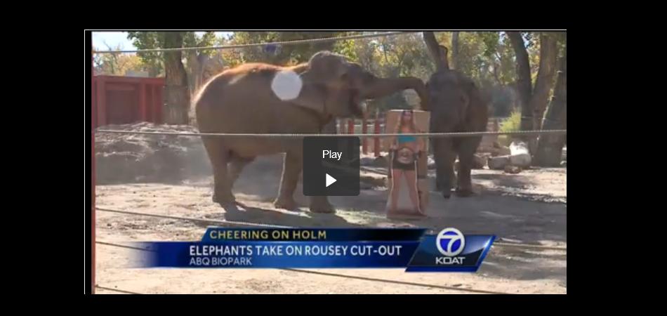 Elephants pick Holly Holm as UFC 193 winner – VIDEO