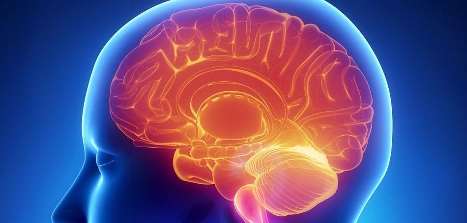 brain scans, John Kavanagh,