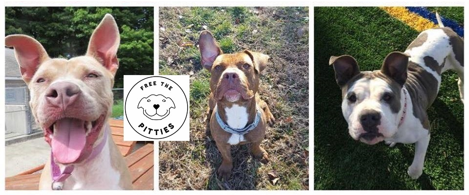 Free the Pitties – Helping people understand most misunderstood K-9s