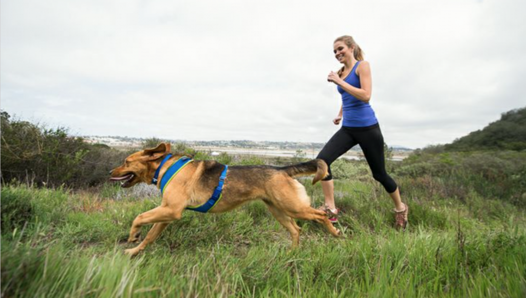 Keeping Fit With Your Dog As Your Training Partner