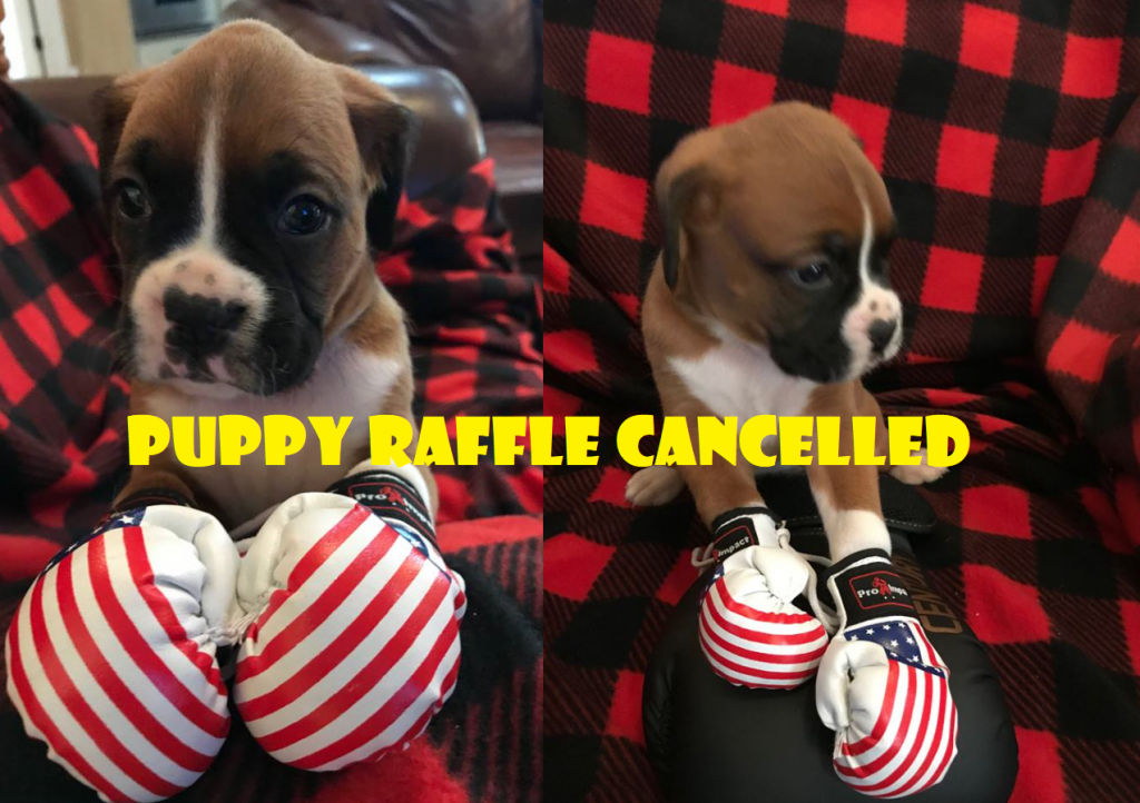 Puppy raffle cancelled after Victory MMA and Fitness receives backlash