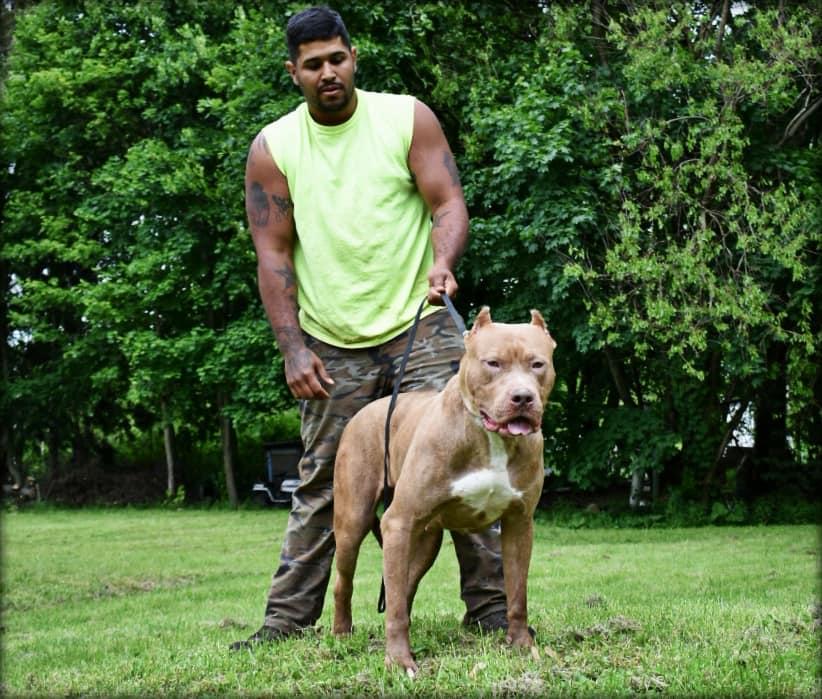 Davis Oracio Jr., dog