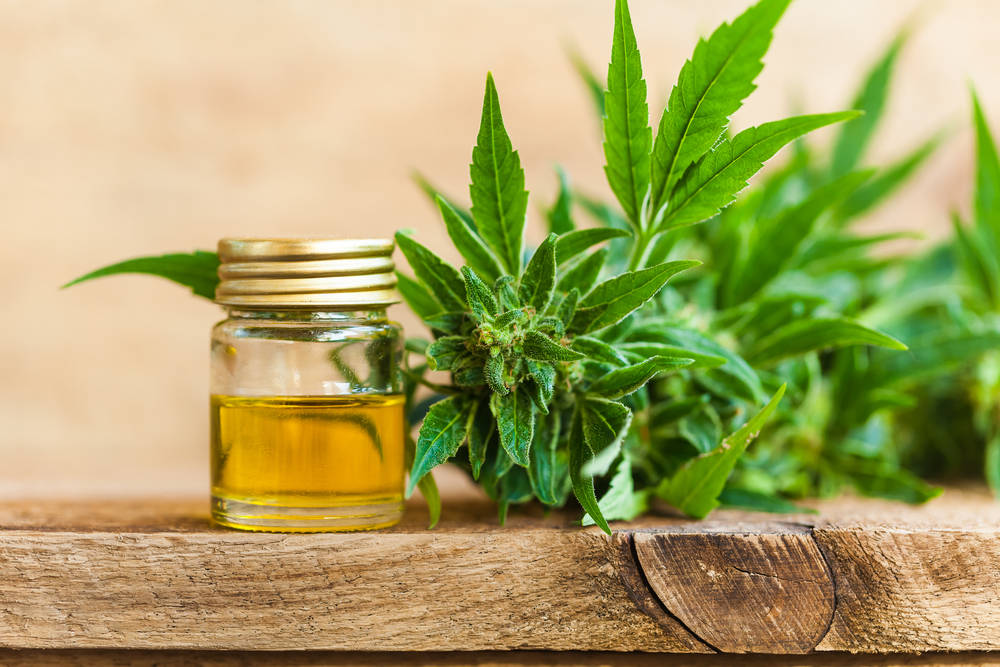 Best CBD Oil For Pain: Why MMA Fighters Are Using CBD To Boost Muscle Recovery