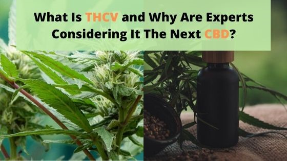 What Is THCV and Why Are Experts Considering It The Next CBD?