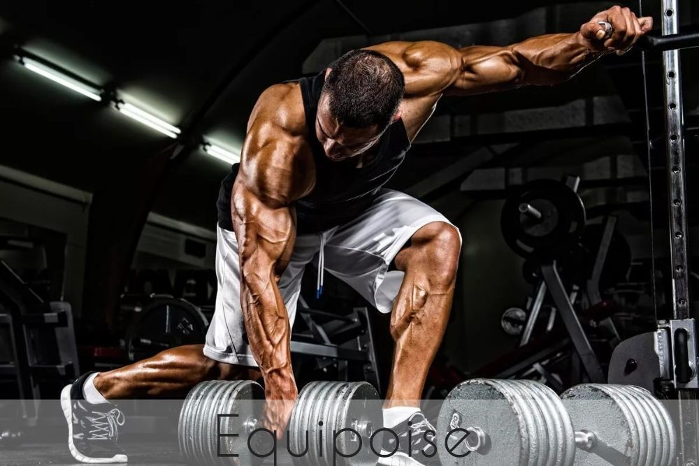 Equipoise Steroid
